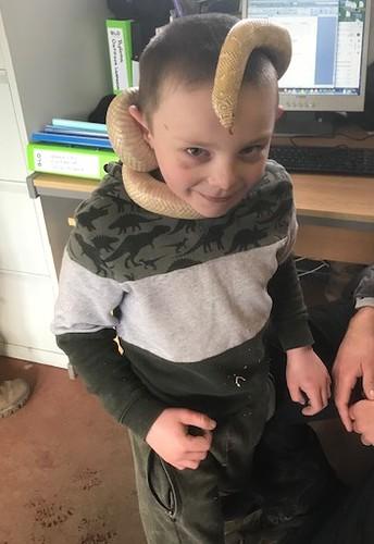 Exploring reptiles .jpg