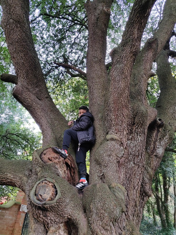 In the trees .jpg