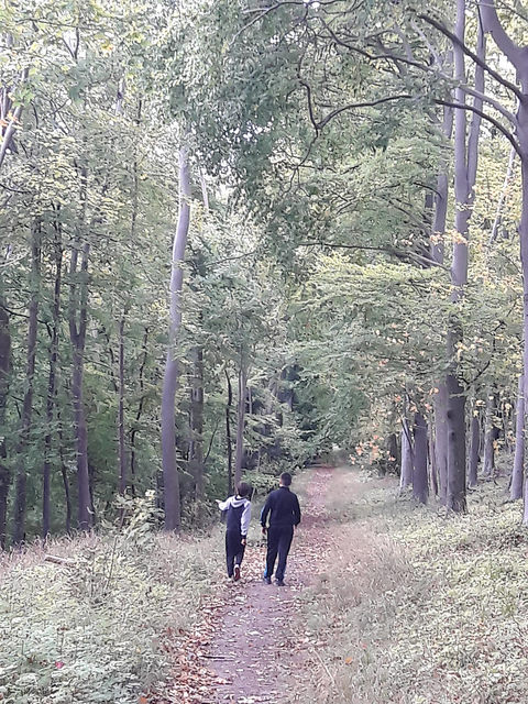 Walking in woods